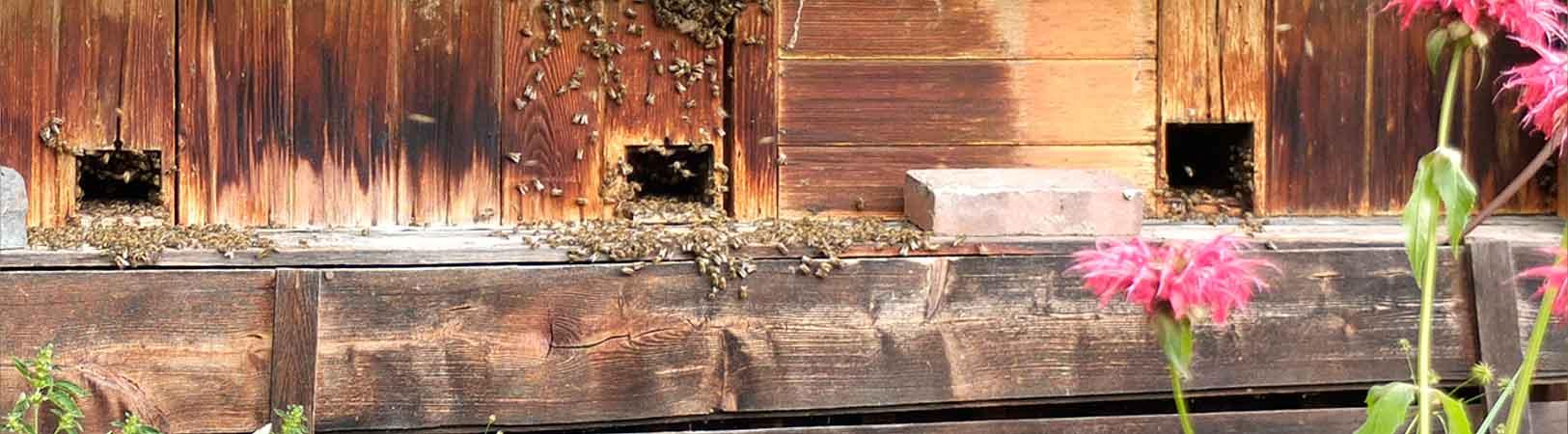 Bienen pflegen