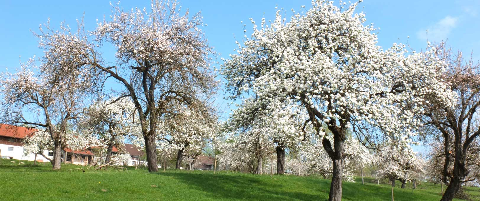 Apfelgarten in Mooseurach am Boschhof