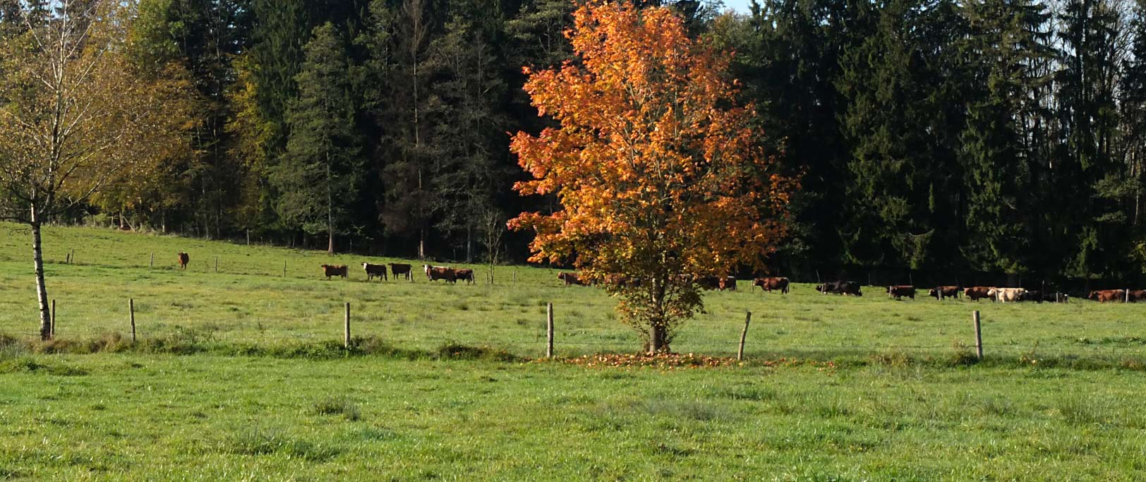 Herbst in Mooseurach