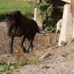 Schweres Pferd